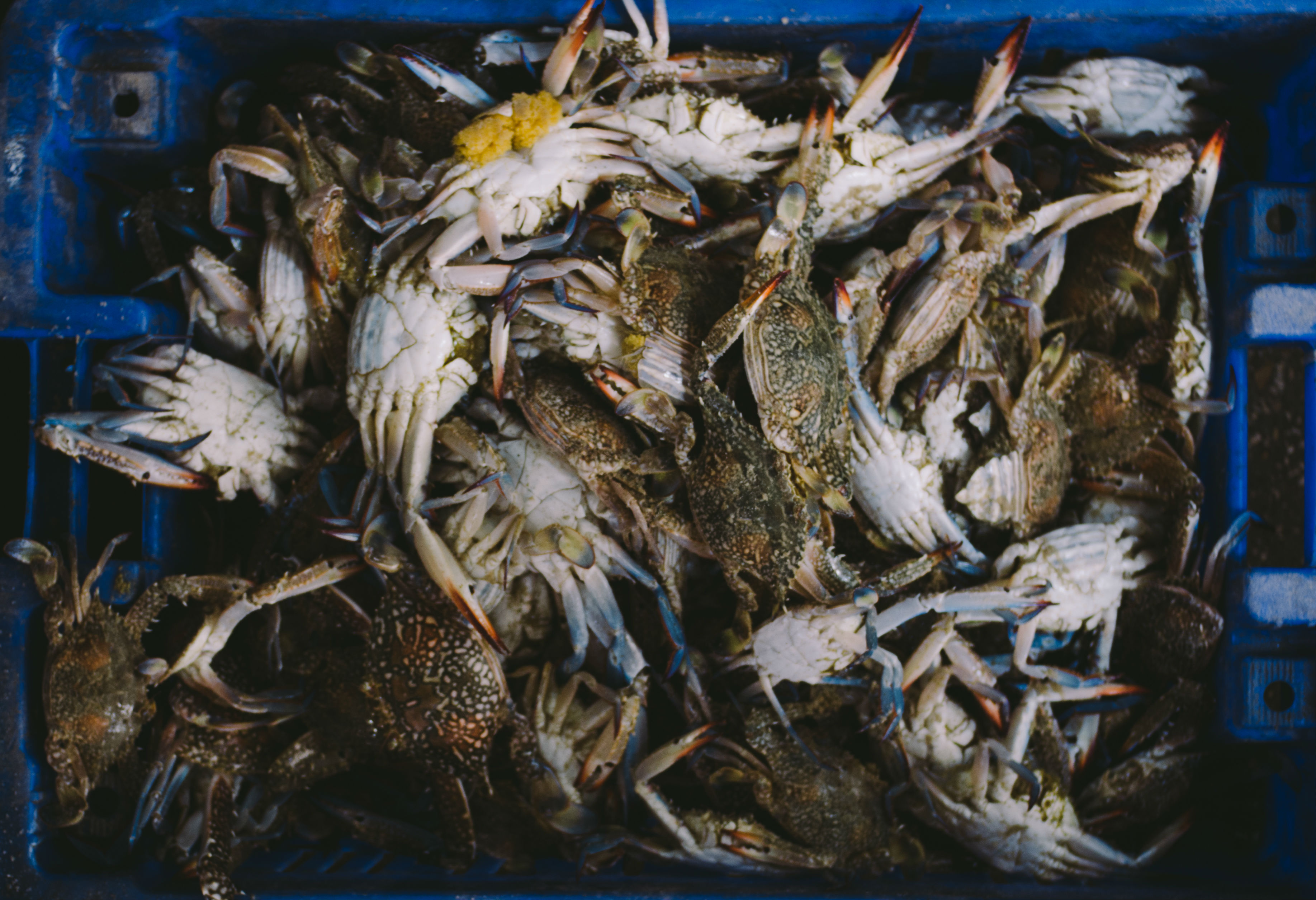 Gaza's fish market lies empty, too big for the downsized hauls with which fishermen now return. But among the jumble of fish and the odd baby shark there is always a crate of prized blue crab