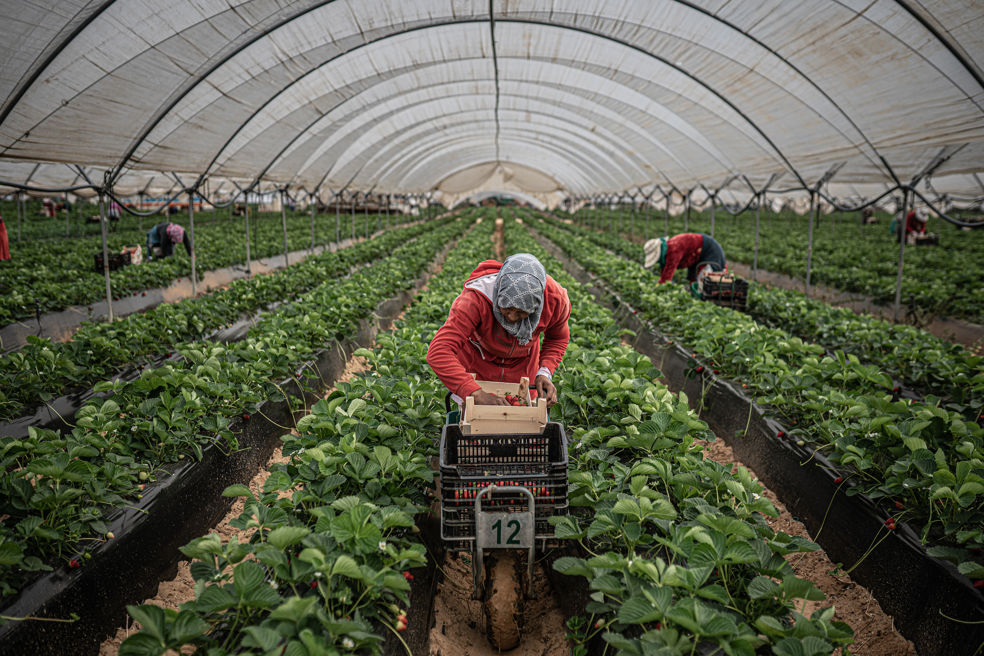 Moroccan women workers Spain strawberry fields
