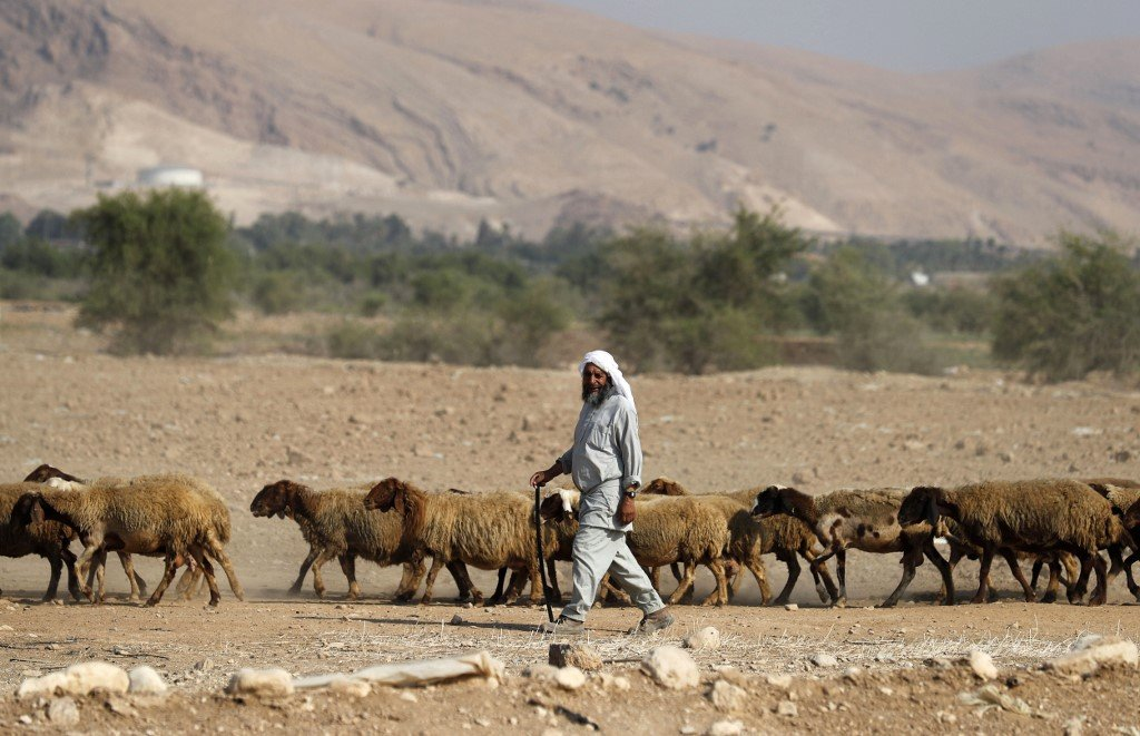 A Bedouin shepherd walks with his herd of sheep in the Jordan Valley on 11 September (AFP)